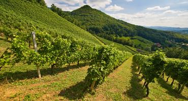 vinogradi-rogaska-slatina
